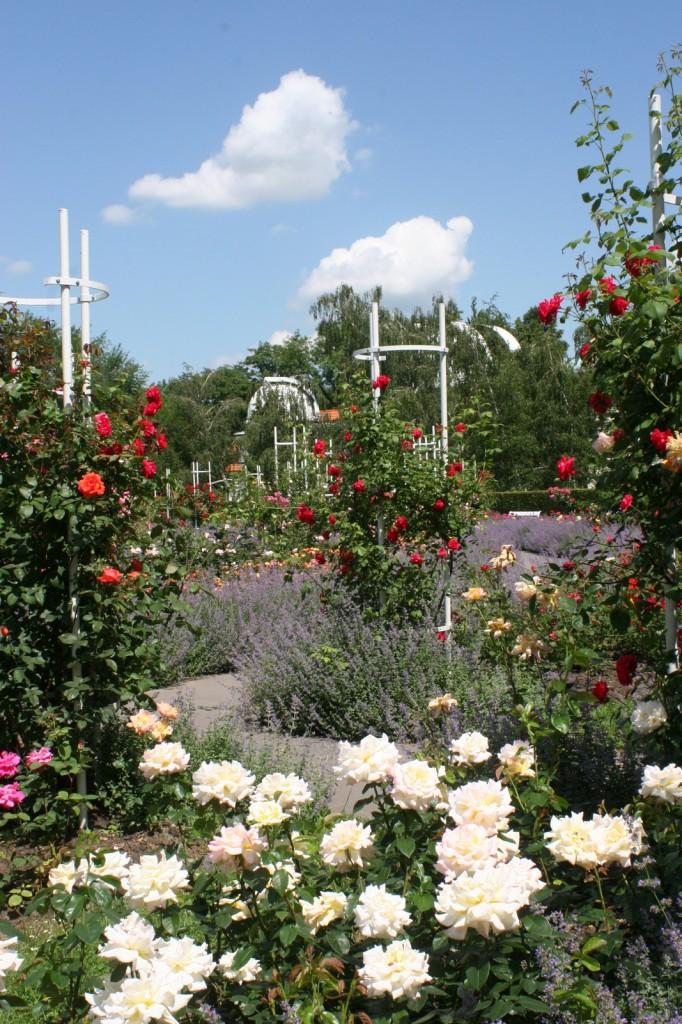 Ruusutarha Petrin-kukkulan laella.